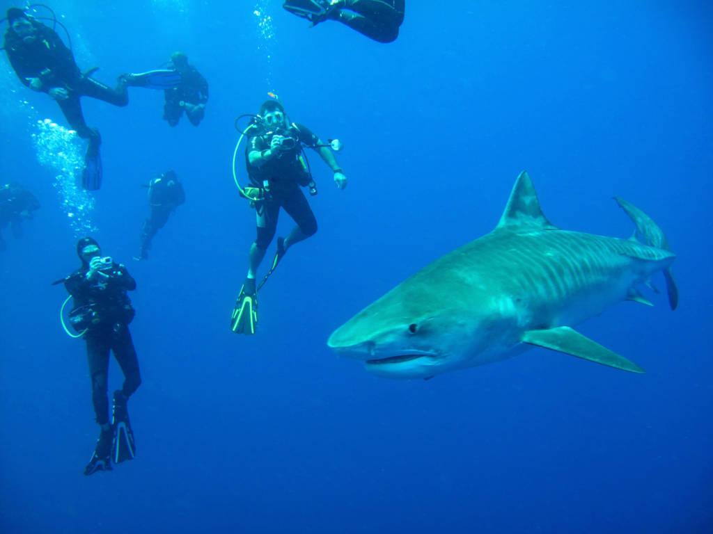 squali-margate