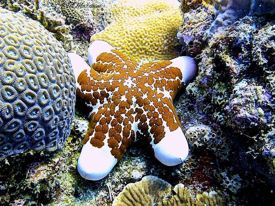 diving-ocean-zanzibar
