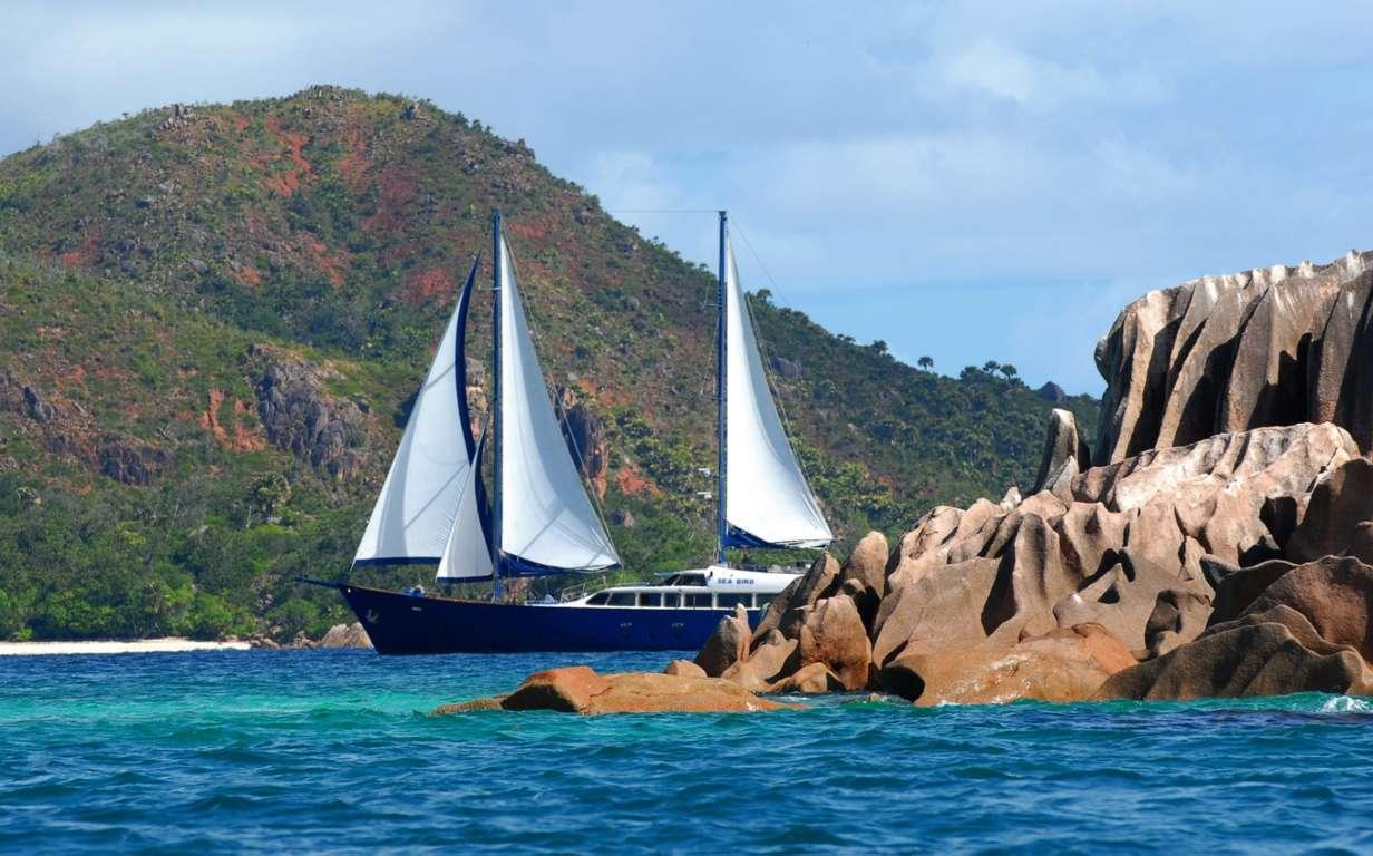 sea-bird-seychelles