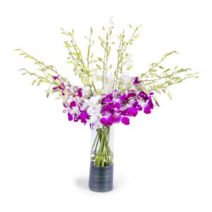 Purple & White Orchid Elegance