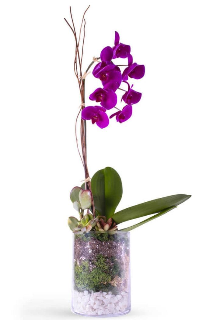 Elegant Orchid & Succulents