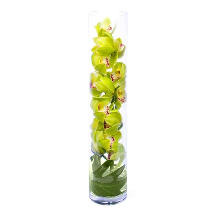 Zen Sensational Orchids