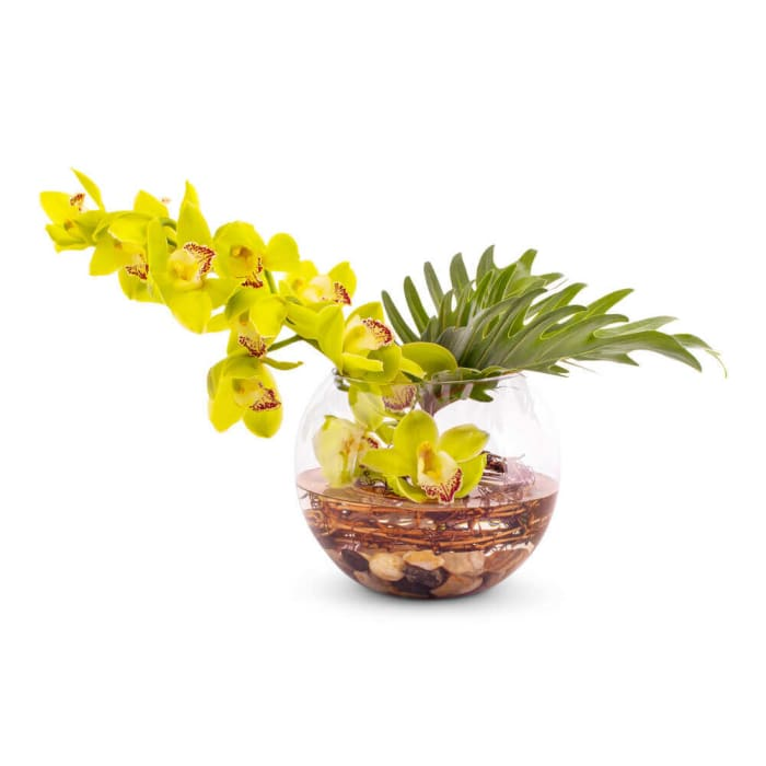 Jade Cymbidium Orchid Arrangement