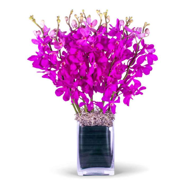 Purple Mokara Orchids