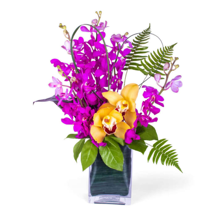 Dancing Mokara Orchids