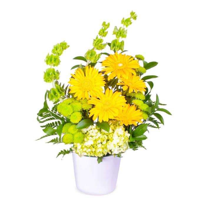 Yellow Gerbera Love