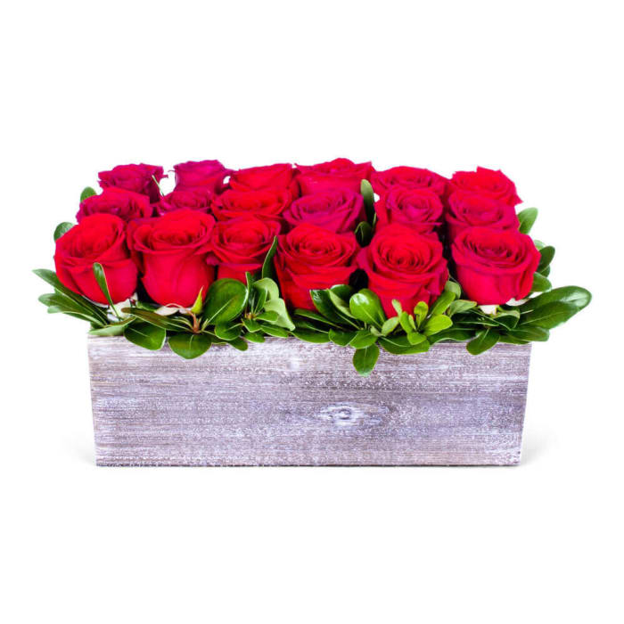 Timeless Elegance of Red roses