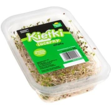 Kiełki lucerny - Pokarm Życia