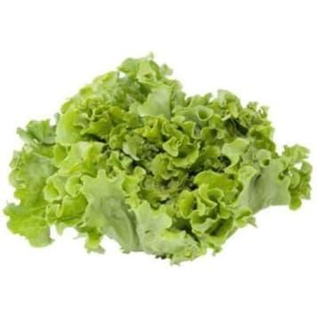 Sałata zielona liść dębu krajowa - Frisco Fresh. Niezwykły smak i kształt.