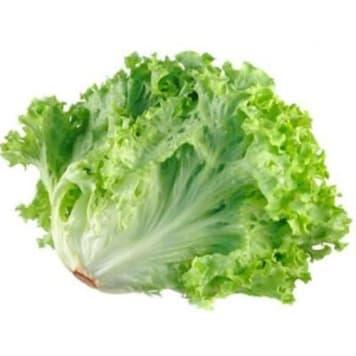 Zielona sałata karbowana - Frisco Fresh do chrupania samodzielnie, na kanapce i w sałatce.