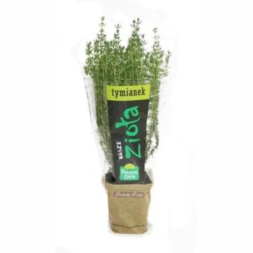Tymianek, świeże zioła w doniczkach - Pokarm Życia