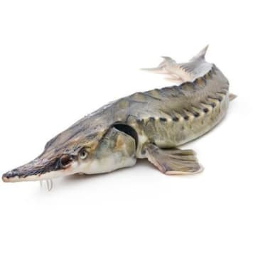 Jesiotr patroszony z Polski - Frisco Fish
