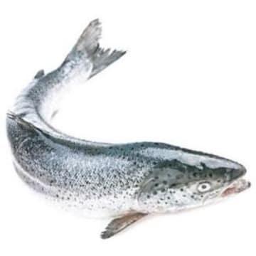 Łosoś norweski - Frisco Fish