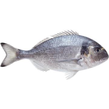 Dorada patroszona świeża - Frisco Fish