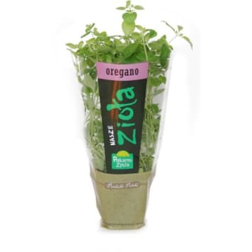 Oregano - świeże zioła w doniczkach - Pokarm Życia