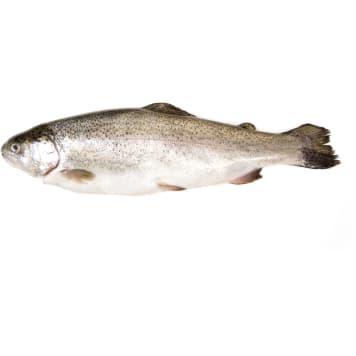 Pstrąg tęczowy patroszony - delikatne, różowe mięso - FRISCO FISH