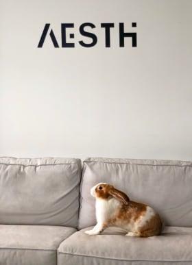 Aesth Magyarország - Fotó az irodáról  - Budapest, Székesdűlő sor, 2120 Magyarország