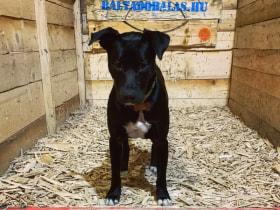 Balta Dobálás - Hogy kutyabarát-e?! :)