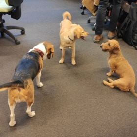 Kutyaparádé az irodában