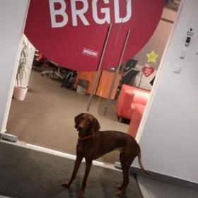 Caddy is itt szeretne dolgozni