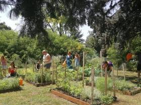 Budapesti Metropolitan Egyetem - Közösségi kertünk