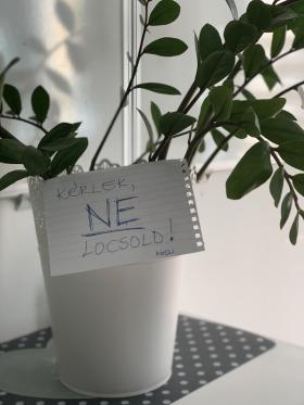 Első Egészségügyi Marketing - Kedvenc tárgy az irodában  - Szeged, Szentháromság u., Magyarország