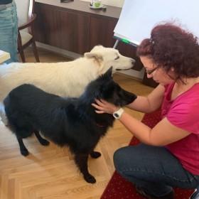 FERLING - Tréning: kutyák szemébe nézve