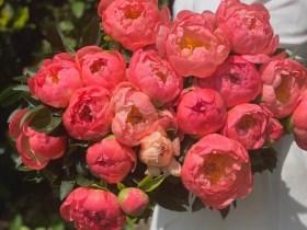Dori Legradi Flowers - Friss bazsarózsák