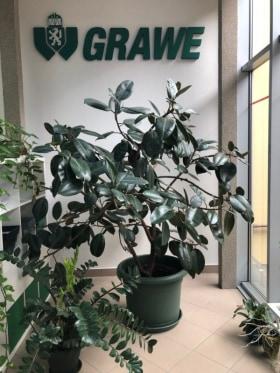 Grawe Székelyudvarhely - Kedvenc tárgy az irodában  - Strada Morii 3, Odorheiu Secuiesc 535600, Románia