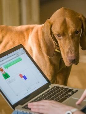Green Fox Academy - Kutyául nehéz ez a feladat