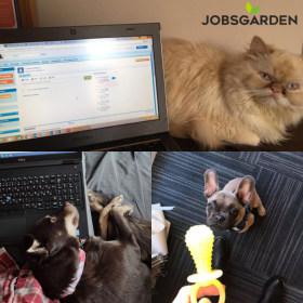 Jobsgarden Kft. - Imádjuk az állatokat!