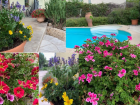 Online Márkaboltok - Szeretjük a szép kertünket.🌷