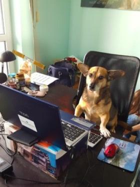 Vision Recruitment - Dió - Dog Vice President