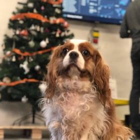Webshippy Fulfillments - Kutya sok a karácsonyi csomag!