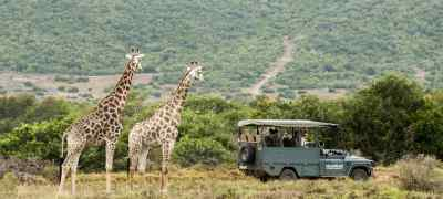 Travel to Safari in South Africa