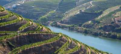 Explore Portugal's Wine Regions