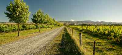 Experience New Zealand's Wine Trail