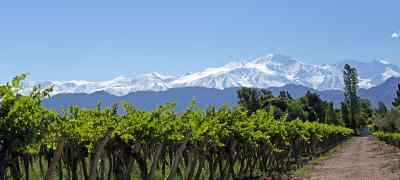 Chile & Argentina Wine Experience