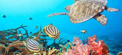 Know Before You Go: Great Barrier Reef