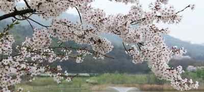 Where to See Spring Blossoms Around the World