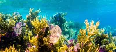 Belize Reef & Rainforest Experience