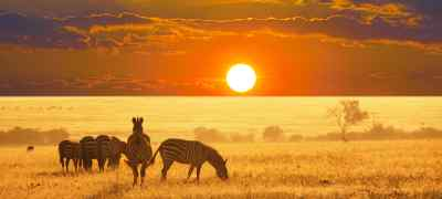Cape Town & Safari Experience