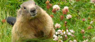 Weather-Predicting Animals That Make Groundhogs Proud