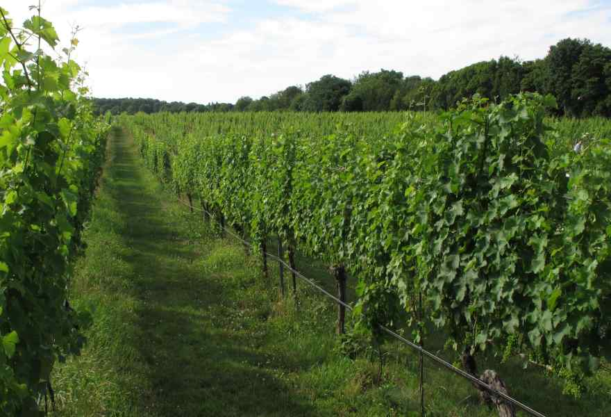 7 Wineries to Visit on Long Island
