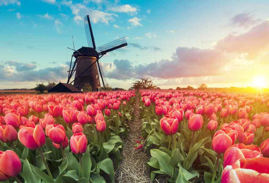 5 Places to Visit in the Netherlands Aside From Amsterdam