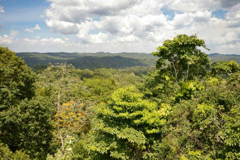 View from Caracol ruins