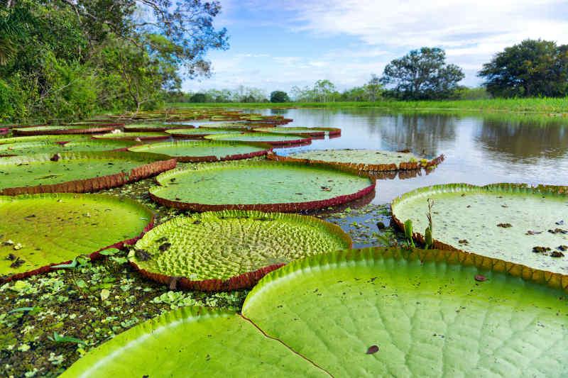 Amazon River• Peru