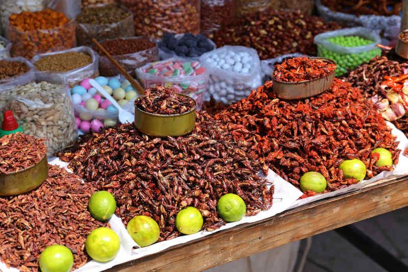 Oaxaca Insect Market