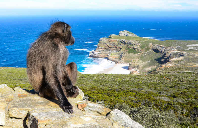 Cape of Good Hope, Cape Point, Western Cape
