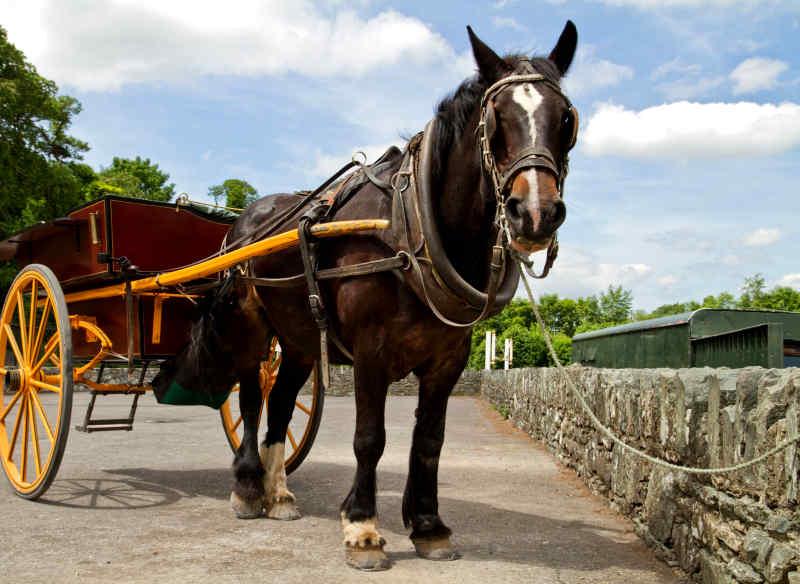 Jaunting car in Killarney